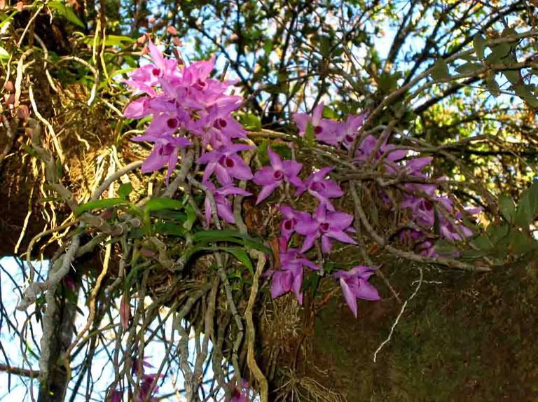 Jardim da terra dica do dia 17 plantas para montar um for Especies ornamentales