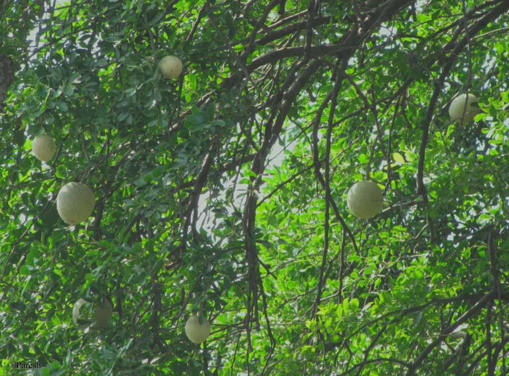 gifting trees nakshatra is forever