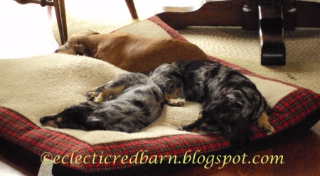 Eclectic Red Barn: Louie, Caleigh, and Marina Sleeping