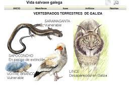 https://dl.dropboxusercontent.com/u/33787994/vida_salvaxe/vida_salvaxe.html