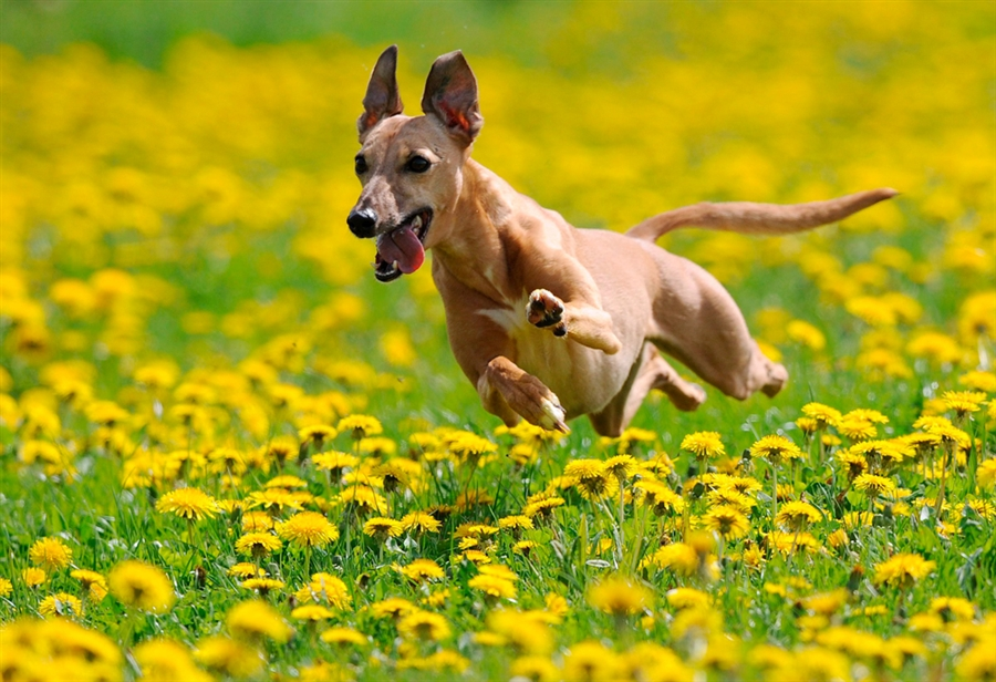 Do you believe in dog?: Stop to smell the flowers. Especially lavender.