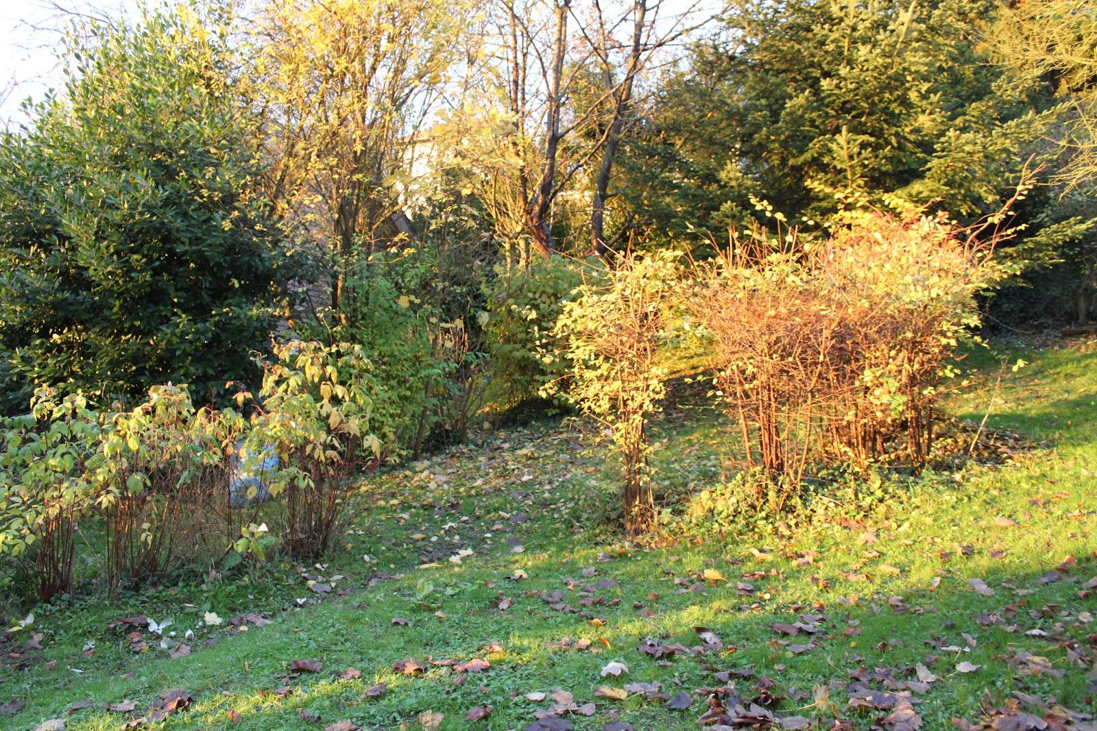 Mon jardin imparfait novembre 2012 for Le jardin imparfait