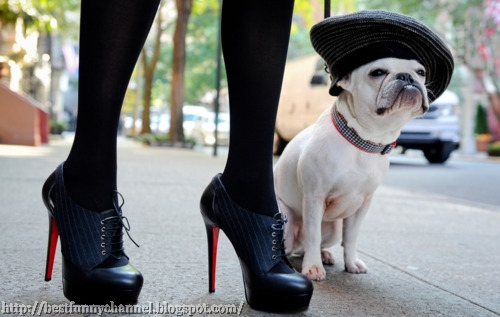 dog fashion lovers.