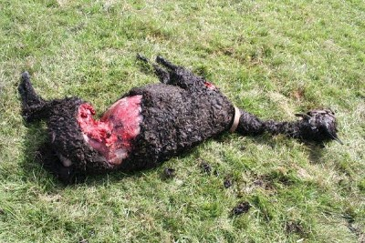 My Neighbor Killed My Dog What Can I Do