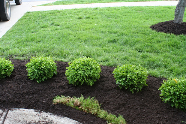 cozy green shrubs landscaping