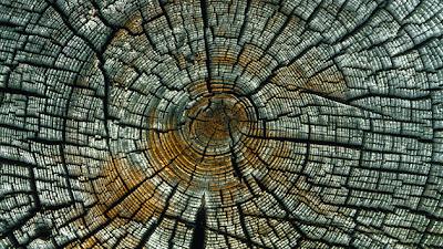 rastros de tormenta solar en los anillos de los árboles, datan de hace más de 1.200 años