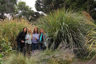 Tiempo jardin viveros en oto o for Gramineas ornamentales vivero