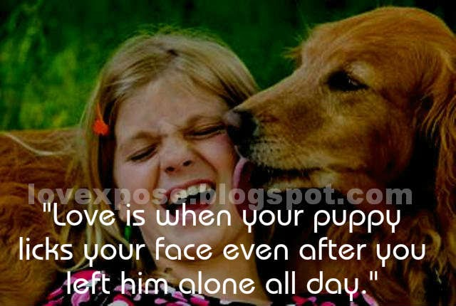 puppy love quotes wallpaper