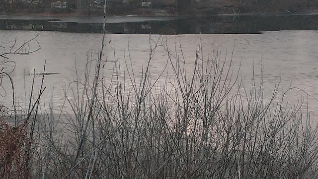pretty pond in December