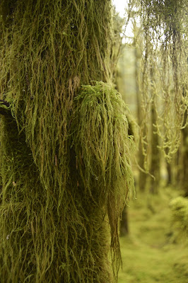 Moss and lichen growing on a tree in a forest on an island near Kodiak, Alaska