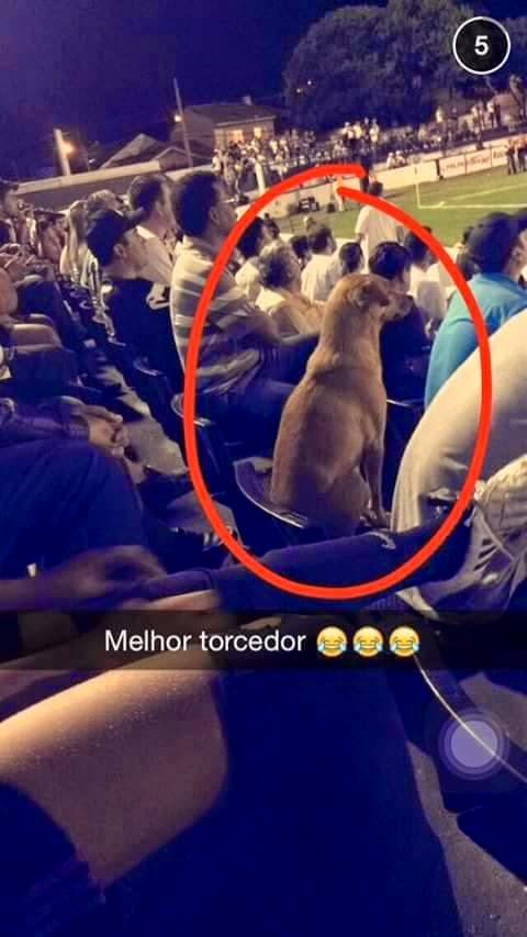 Em Ponta Grossa até cachorro torce para o Operário