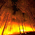 Aprobada definitivamente la Ley de Montes que permite construir en terreno incendiado
