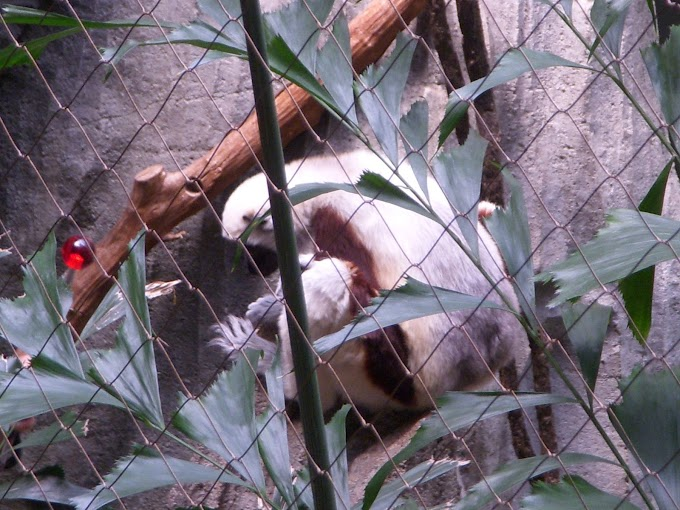 Bronx Zoo Part IV: Madagascar, Mouse House, and Congo Gorilla Forest