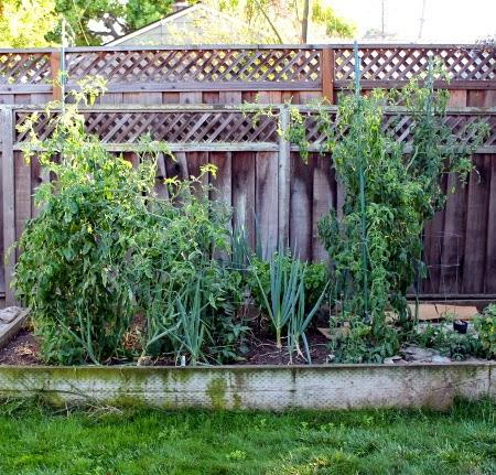 The August 2014 garden