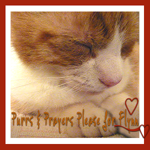 Purrs for Flynn please