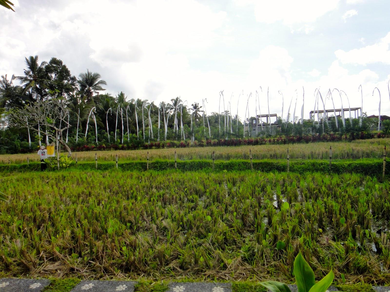 Bebek Tepi Sawah Rice Field Ubud Bal