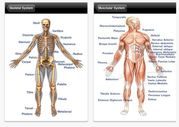 Body parts human anatomy