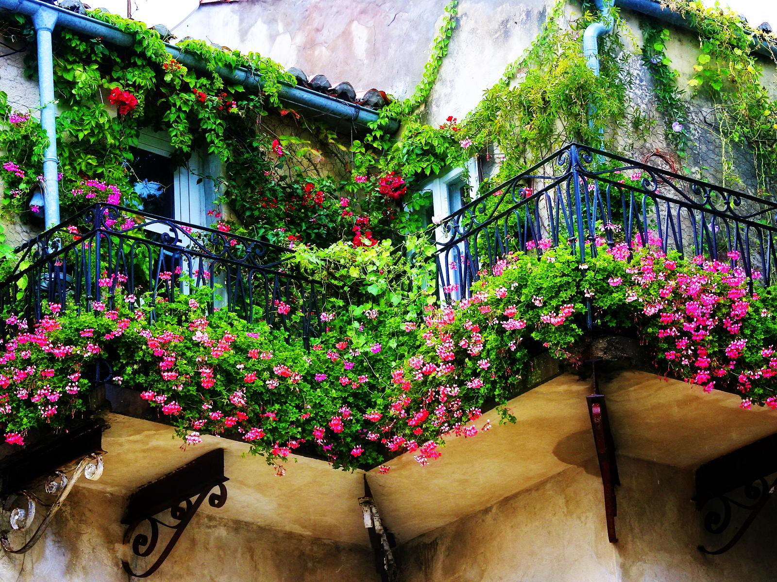Использование вьющихся растений на даче, балконе и придомово.