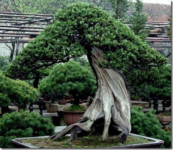 share good stuffs collection of 15 best bonsai trees