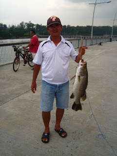 Luring for Barramundi also know as Kim Bak Lor 金目鲈 or Siakap weighing 2kg plus Caught by Ah Huat At Woodland Jetty
