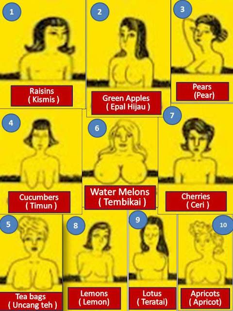 Jenis-Jenis Payudara Wanita Lengkap Dengan Nama Dan Gambarnya