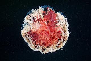 Amazing Jellyfish Photos