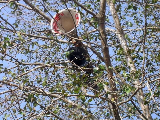 рупор на дереве