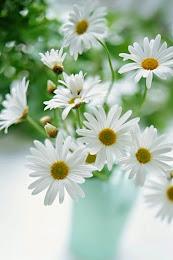 Flores para Você.