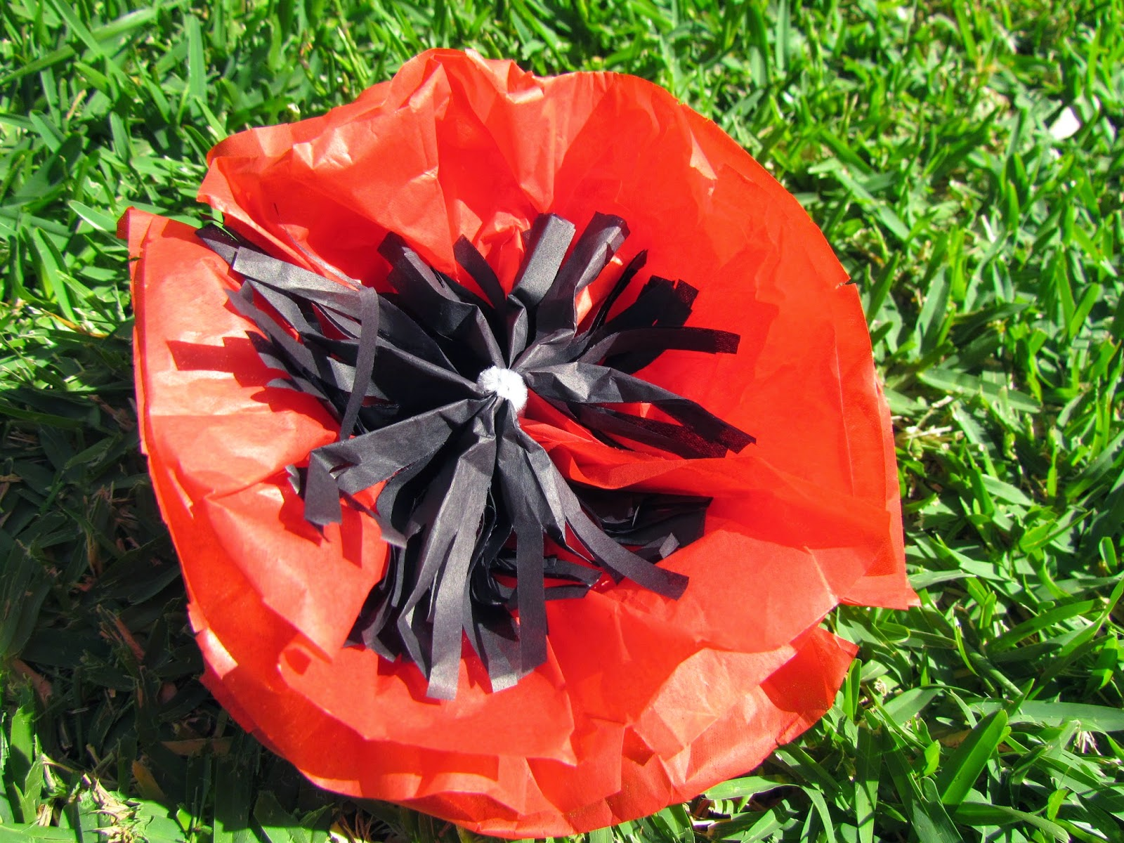 Living By The Guide Law Tissue Paper Poppies