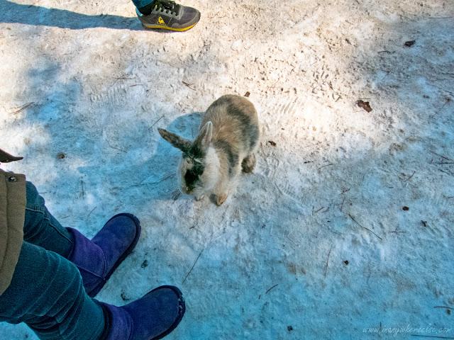 Nami Island Rabbit