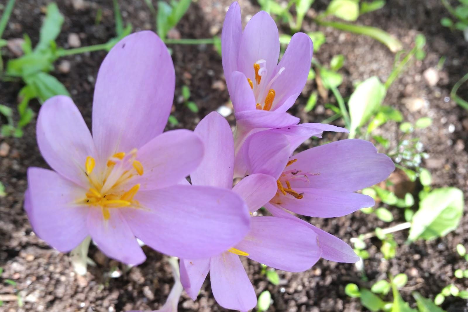 Картинки по запросу цветы в саду картинки