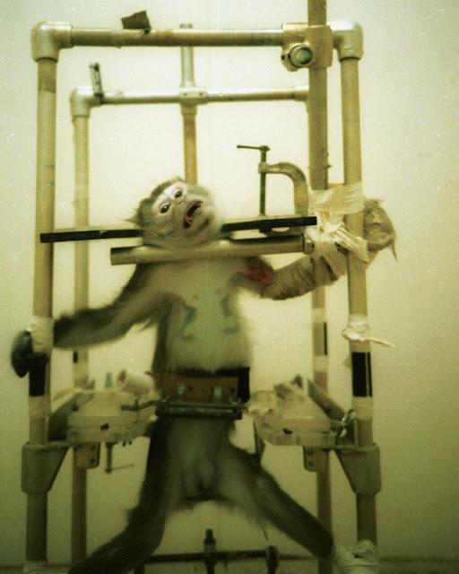 hayvan deneyleri