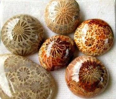 batu akik fosil karang