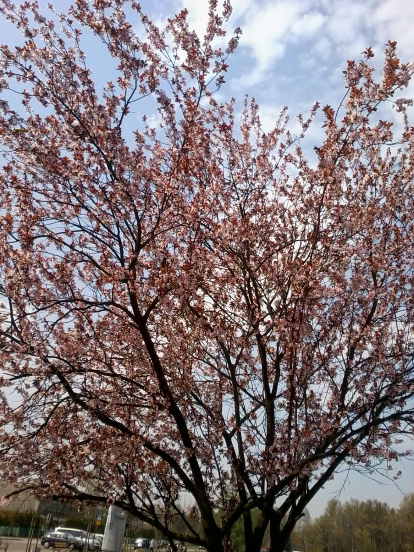 wiosna ... Skaldowie