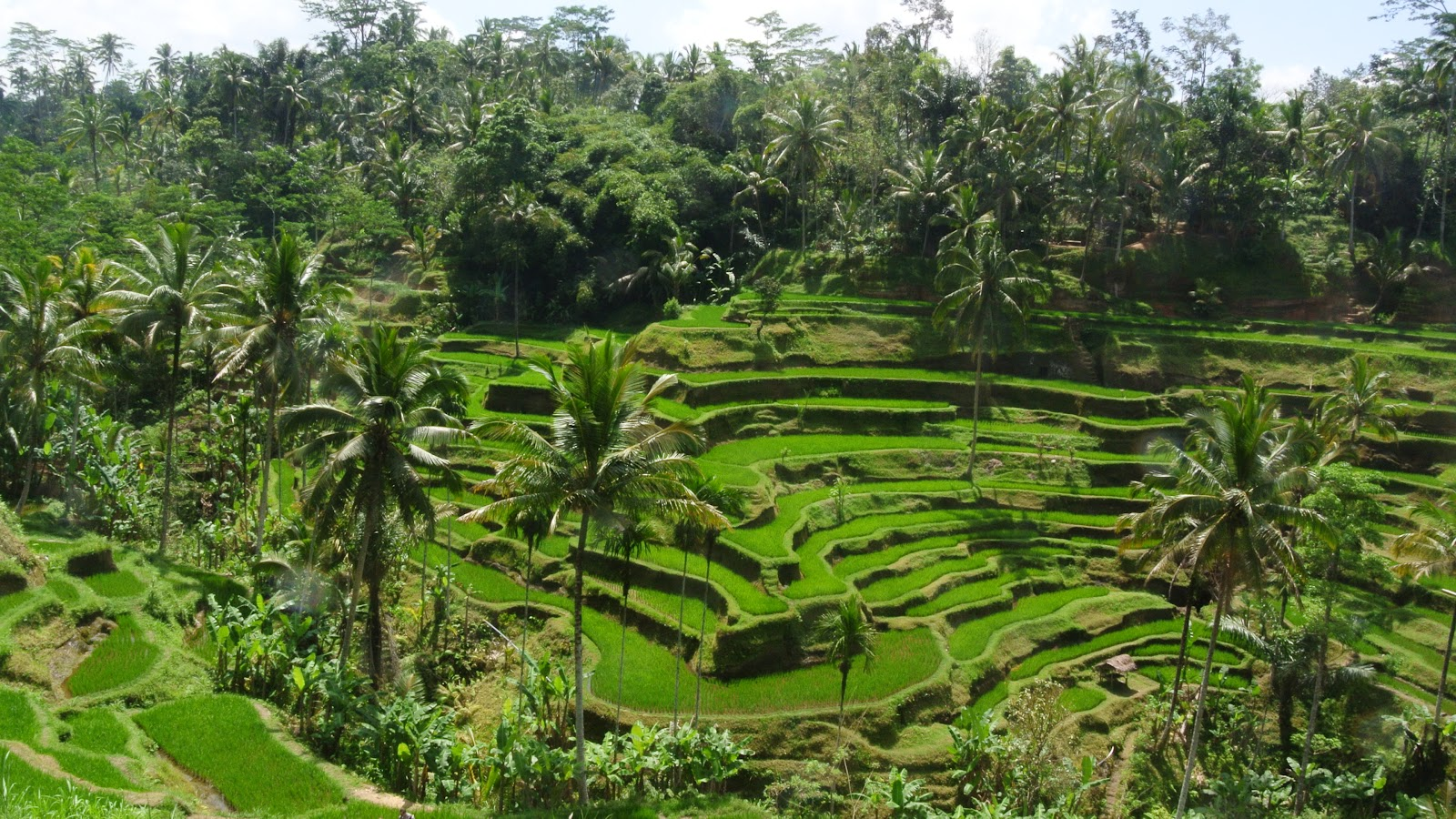 ubud chat Host to some of bali's most iconic landscapes, ubud is one of the most beautiful spots on the island rice paddies, raw food, markets, temples + monkeys.