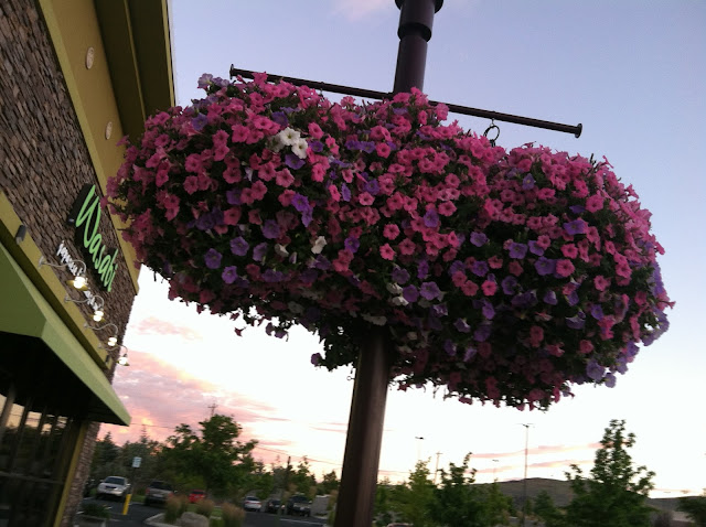 Reno Wasabi Flowers