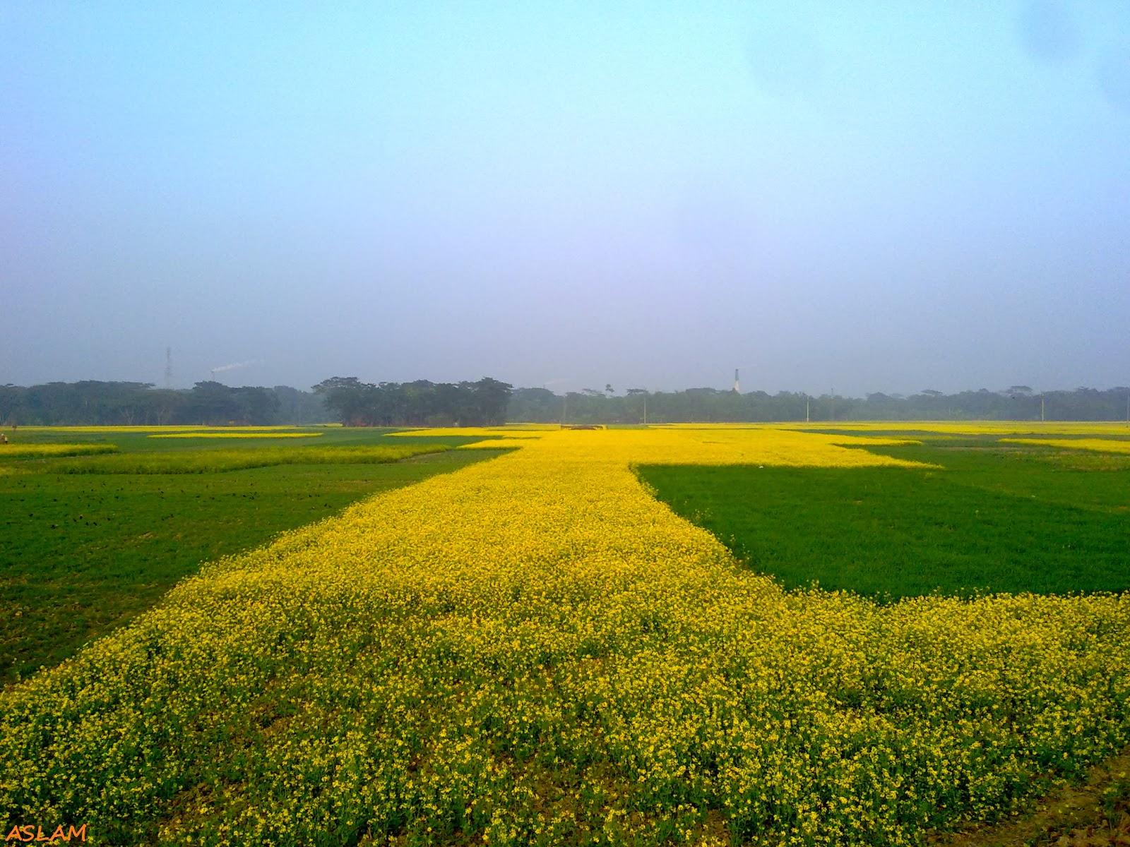 Yellow and green Bangladesh