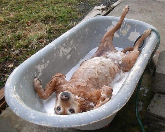 Imagenes chistosas de gente bañandose Imagui