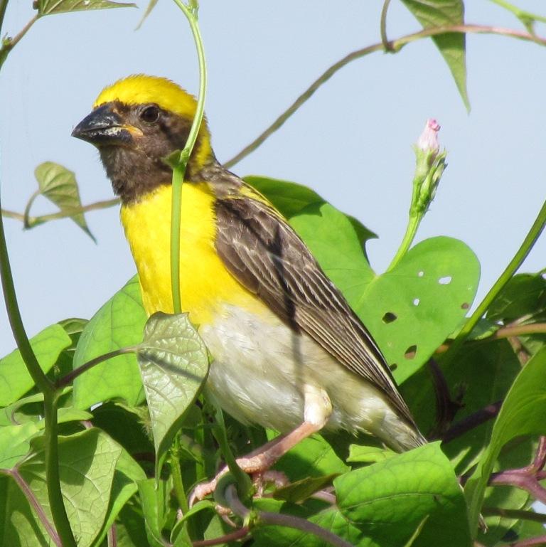 Animal Snapshot: BIRDS - Among the Warm Blooded ...