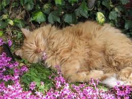 Soneca nas flores