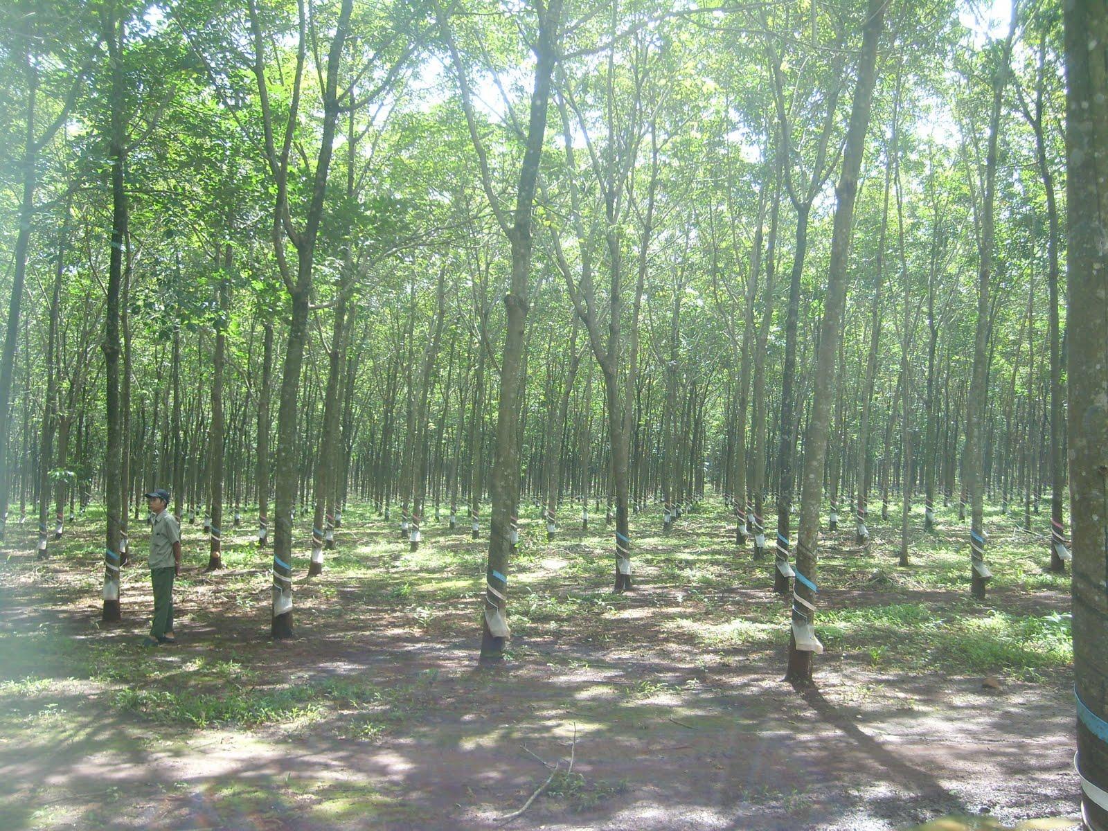 Фото привязанные в лесу 11 фотография