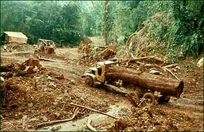illegal logging in the philippines Forest management bureau – denr, philippines 21 october  code of the  philippines, (may 1975)  neutralize identified illegal logging.