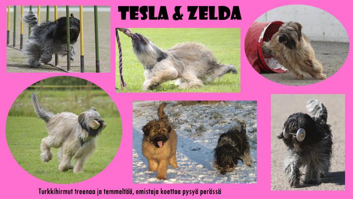 Tesla & Zelda