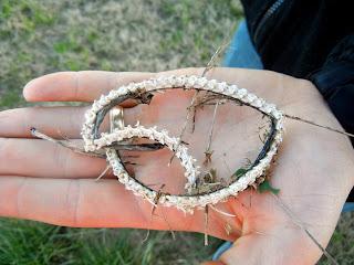 A snake skeleton we found at the Brazoria National Wildlife Refuge