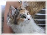 Muistoissamme: Töppeli-kissa