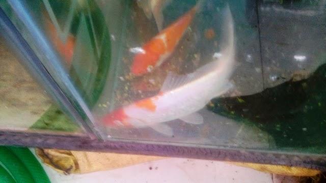 Joe 39 S Aquaworld For Exotic Fishes Mumbai India 9833898901