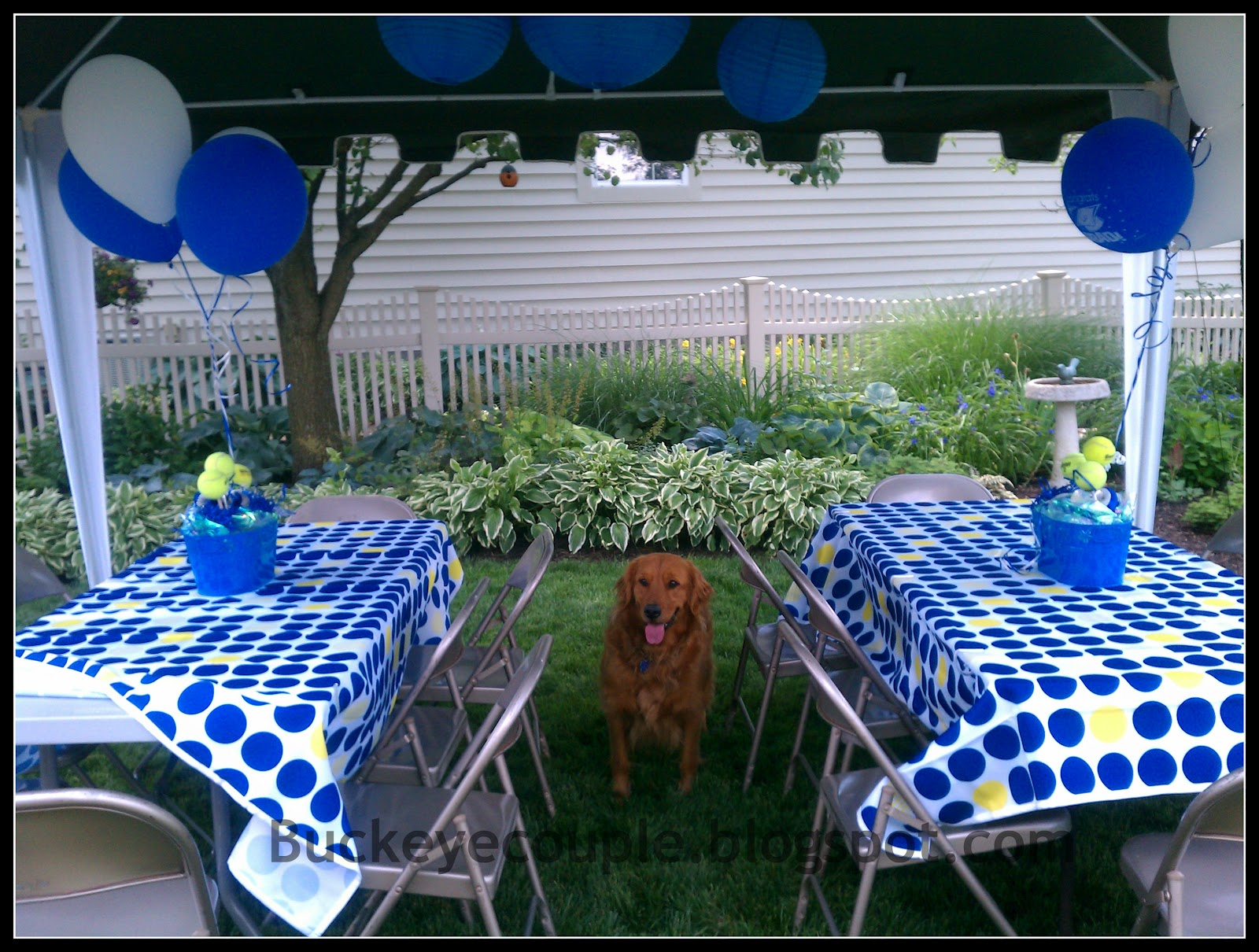 Centerpieces For Outdoor Graduation Party : Izzy, their golden, is obsessed with tennisballs She was waiting by