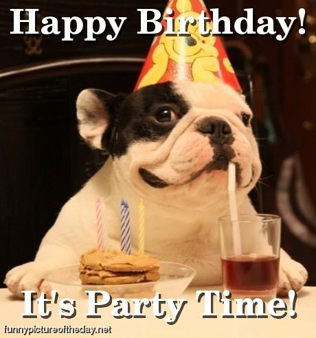 Birthday Images Funny on Happy Birthday Funny Dog Party Time