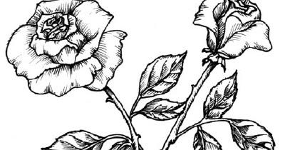 Sketsa Gambar Bunga | Gambar Pemandangan
