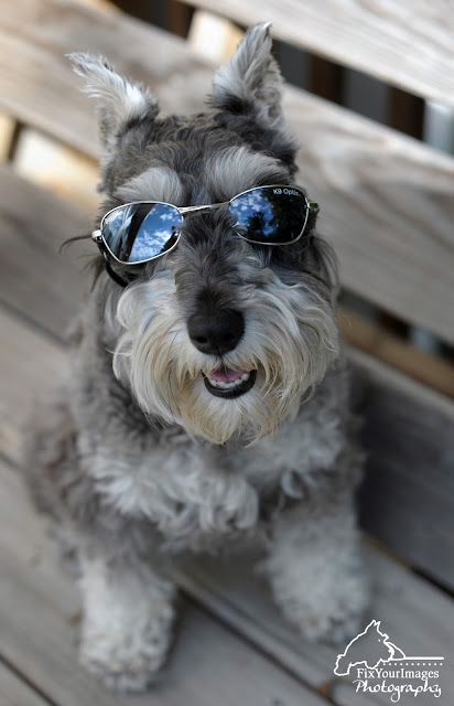 Partnering With Baxter Boo Www Baxterboo Com Dog